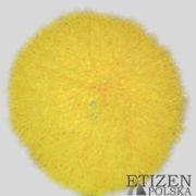 Etizen Żółty